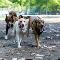 Overton Park Dog Park
