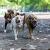 Overton Park Dog Park - Dog Park in Memphis TN