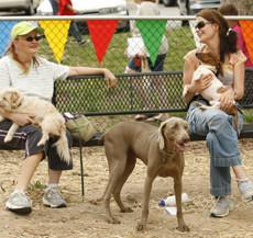 PetSafe-Downtown-Dog-Park.jpg