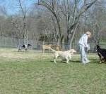 Fenway's Dog Park Goodlettsville, TN