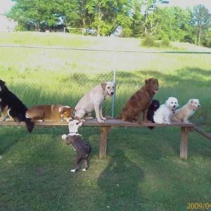 Petal Dog Park Petal, MS