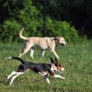Sawyer Dog Park Louisville, KY