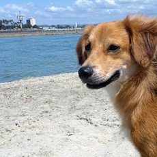 Coronado Dog Beach in Coronado CA