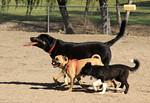 Harry Griffen Park Dog Park in La Mesa CA
