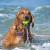 Huntington Dog Beach in Huntington Beach CA