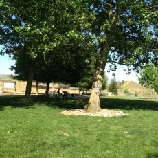 Phenix Community Dog Park in Benicia, CA