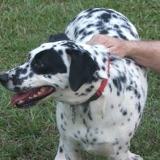 Adair Dog Park in Decatur GA
