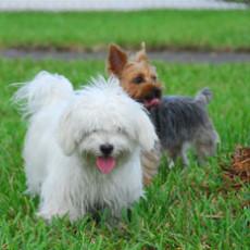 Canine Cove Dog Park in Boca Raton FL