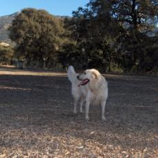 Clayton Dog Park in Clayton CA