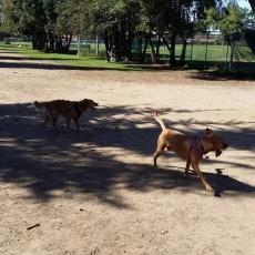 Glenbrook Dog Park in Sacramento CA