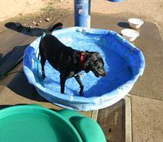 Marco Dog Park in Roseville, CA