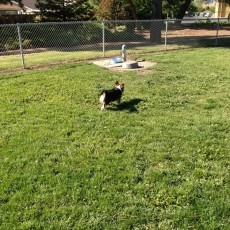 May Nissen Dog Park in Livermore CA