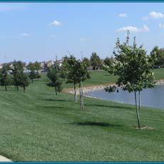 North Natomas Regional Park - Dog Park Sacramento, CA