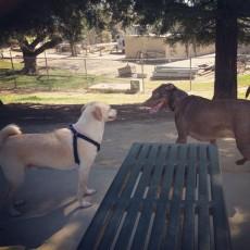 Partner Park Dog Park in Sacramento CA