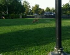Riverside Dog Park in Riverside CA