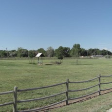 Rover's Run Dog Park in Greeley, CO