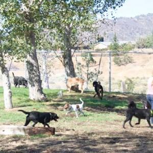 Tehachapi's Dog Park
