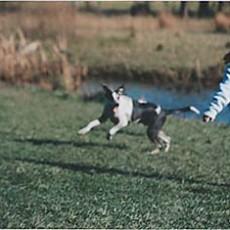 Beck-Lake-Dog-Park-in-Tinley-Park-Illinois.jpg