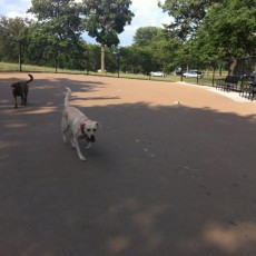 Clarendon Park Community Center Dog Park Chicago IL