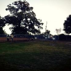 Leita Thompson Memorial Dog Park in Roswell GA