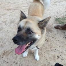 Lenora Park Dog Park in Snellville GA