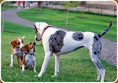Nampa Dog Park In Nampa Id