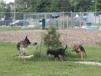 Urbana-Illinois-Dog-Park.jpg
