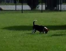 Calcasieu Parish Animal Control Dog Park