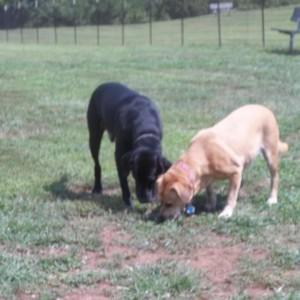 Grays Road Dog Park