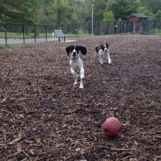Olney Manor Dog Park in Olney MD