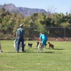 Bark Park Dog Park in Alamogordo, NM