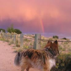 Frank S. Ortiz Dog Park Santa Fe New Mexico