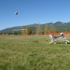 Hugh Rogers Wag Dog Park in Whitefish MT