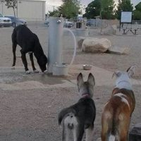 Las Cruces Dog Park