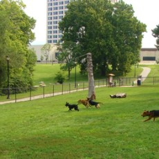 Penn Valley Off-Leash Dog Park