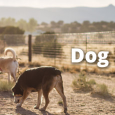 Santa Fe Animal Shelter Dog Park
