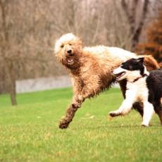 Shaggy Pines Dog Park