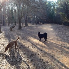 Barking ham Park Dog Park in Charlotte NC