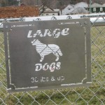 Bing's Barking Lot