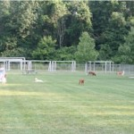 Oak Grove Dog Park