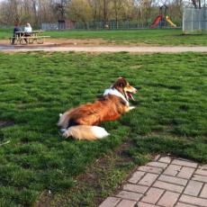 Pooch Playground Dog Park at Pizzurro Park in Gahanna Ohio