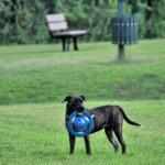 Riverbend Dog Park