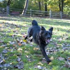 Symmes Township Dog Park in Loveland OH