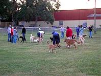 Bark Park - Dog Park