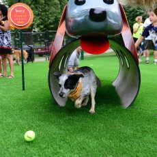 Beneful Dream Dog Park at Buchanan Park in Lancaster PA