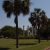 Cannon Park dog park in Charleston SC