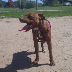 Gano Street Dog Park in Providence RI