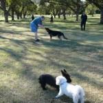 Georgetown Bark Park