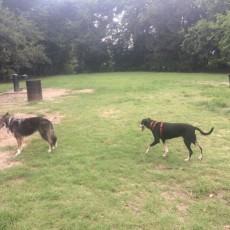 Hampton Park Dog Run in Charleston, SC
