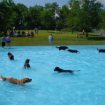 Lucky Paws Dog Park and Pool